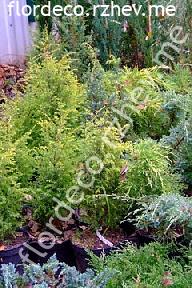 размер растений - контейнеры 5л